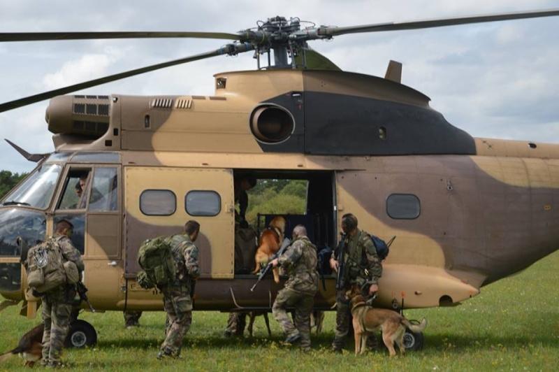Animaux soldats - Page 5 4111