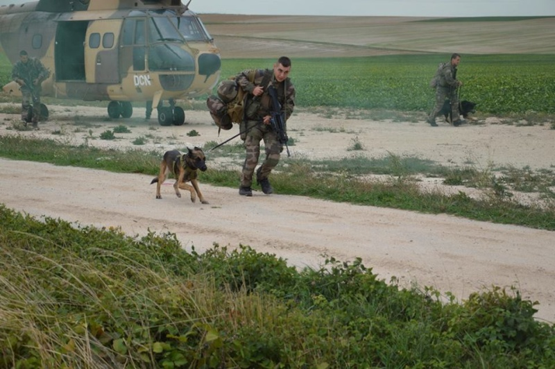 Animaux soldats - Page 5 756