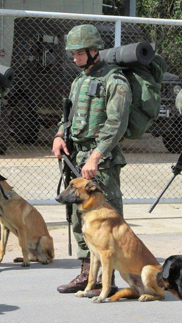Animaux soldats - Page 5 8350