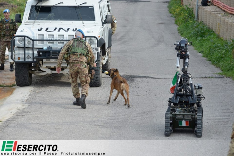 Animaux soldats - Page 5 9136