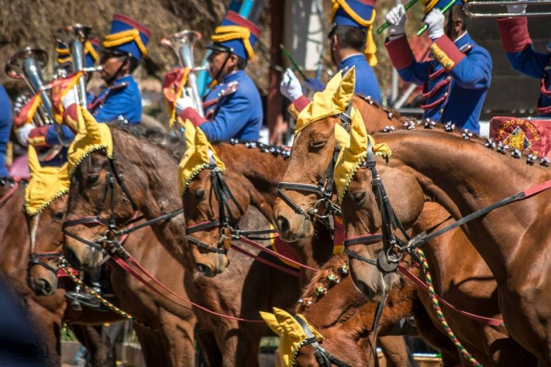 Armée bolivienne - Page 2 976