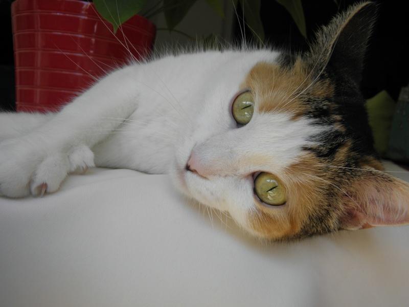 Havana, rebaptisée Chihiro, jolie tricolre environ 2 ans du côté de Limoges - Page 5 P8031618