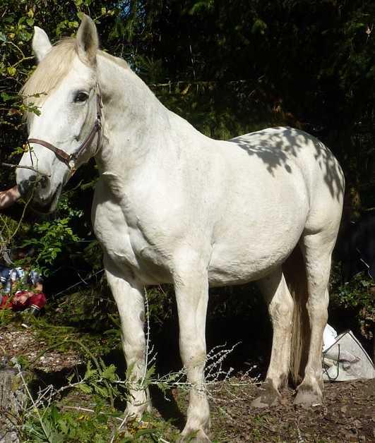 CARESSE – OI (SF x Percheron) – née en 1990 - décédée chez son propriétaire, avant adoption   2015_911