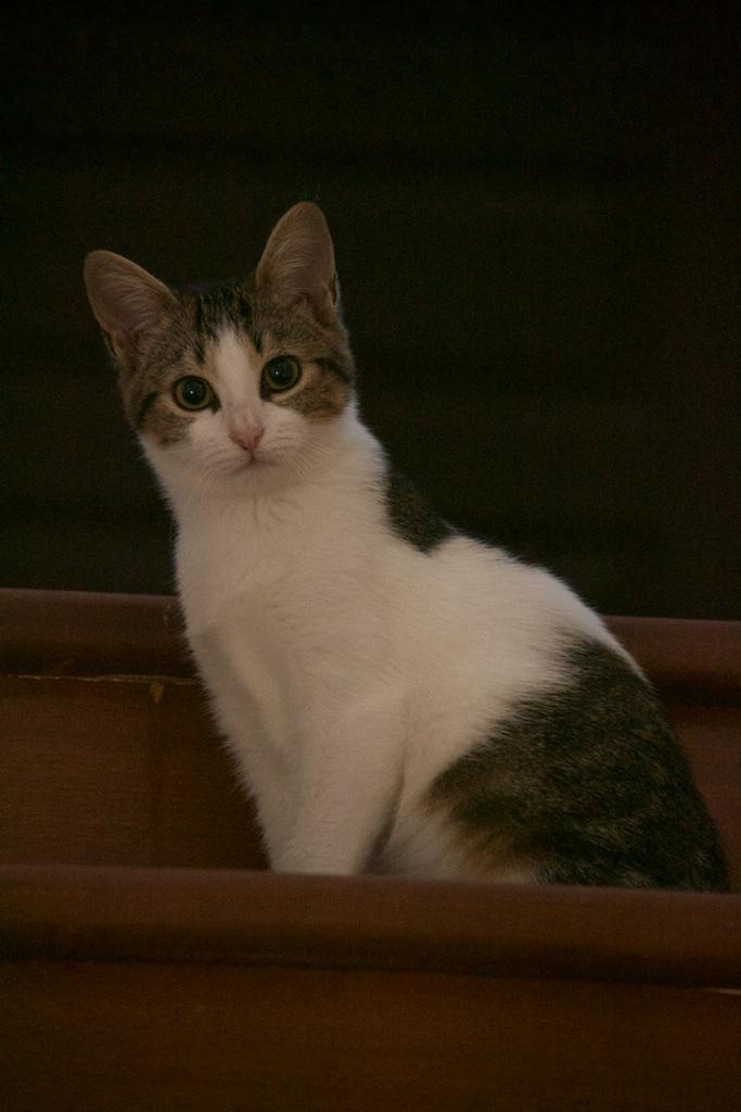 URGENT - Recherche prise en charge asso/refuge pour 5 chatons d'un site de chats libres (Bretagne - 35) Dsc_0121