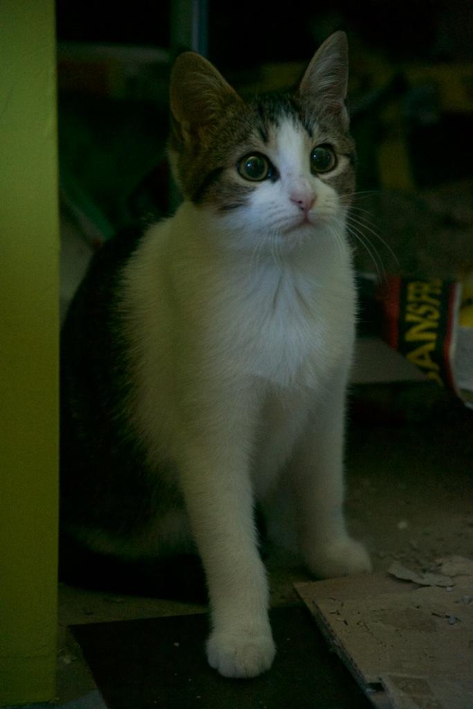 URGENT - Recherche prise en charge asso/refuge pour 5 chatons d'un site de chats libres (Bretagne - 35) Dsc_0122