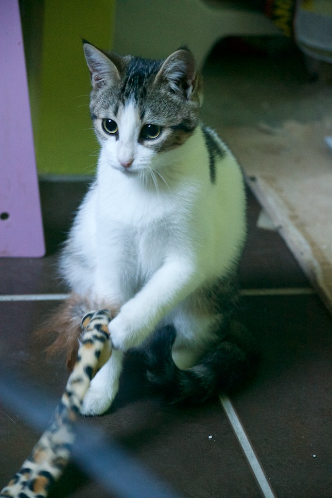 URGENT - Recherche prise en charge asso/refuge pour 5 chatons d'un site de chats libres (Bretagne - 35) Dsc_0123