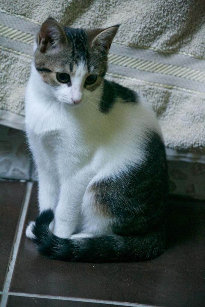 URGENT - Recherche prise en charge asso/refuge pour 5 chatons d'un site de chats libres (Bretagne - 35) Dsc_0124