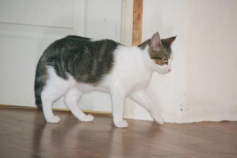 URGENT - Recherche prise en charge asso/refuge pour 5 chatons d'un site de chats libres (Bretagne - 35) Dsc_0125