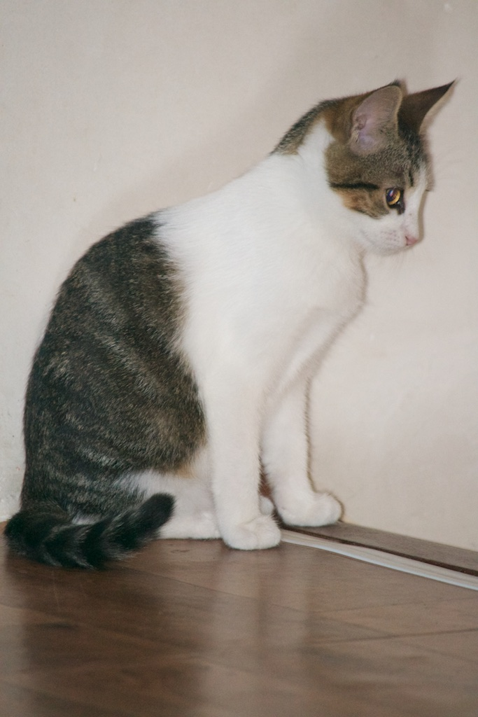 URGENT - Recherche prise en charge asso/refuge pour 5 chatons d'un site de chats libres (Bretagne - 35) Dsc_0126