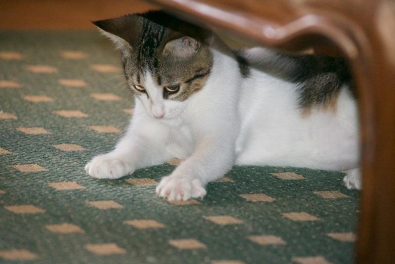 URGENT - Recherche prise en charge asso/refuge pour 5 chatons d'un site de chats libres (Bretagne - 35) Dsc_0128