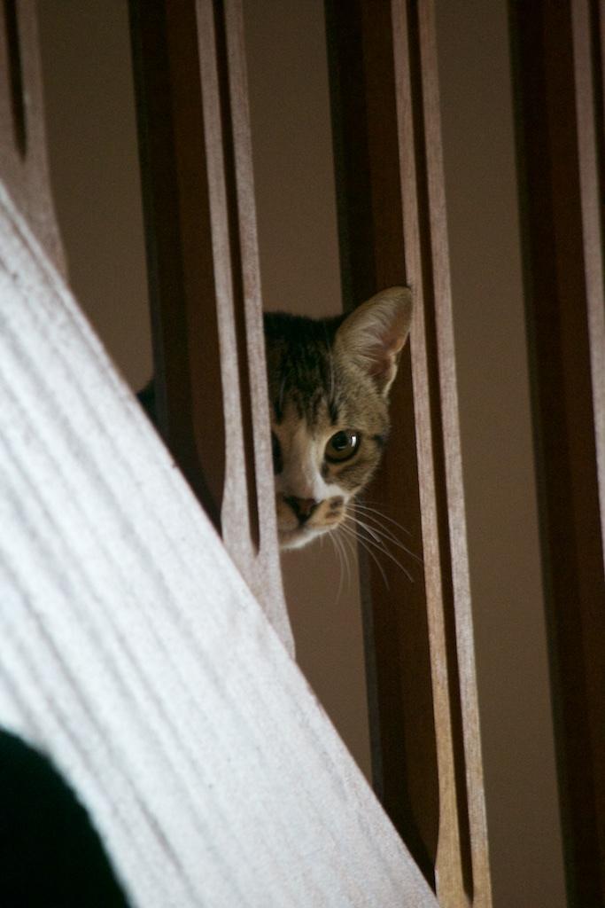 URGENT - Recherche prise en charge asso/refuge pour 5 chatons d'un site de chats libres (Bretagne - 35) Dsc_0130