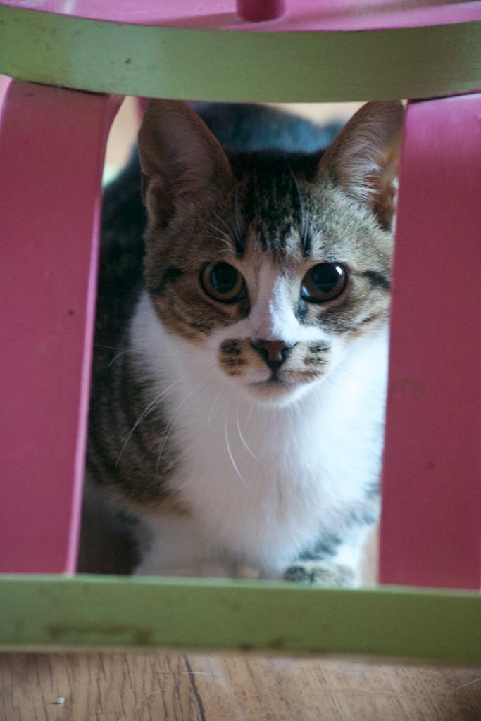 URGENT - Recherche prise en charge asso/refuge pour 5 chatons d'un site de chats libres (Bretagne - 35) Dsc_0131