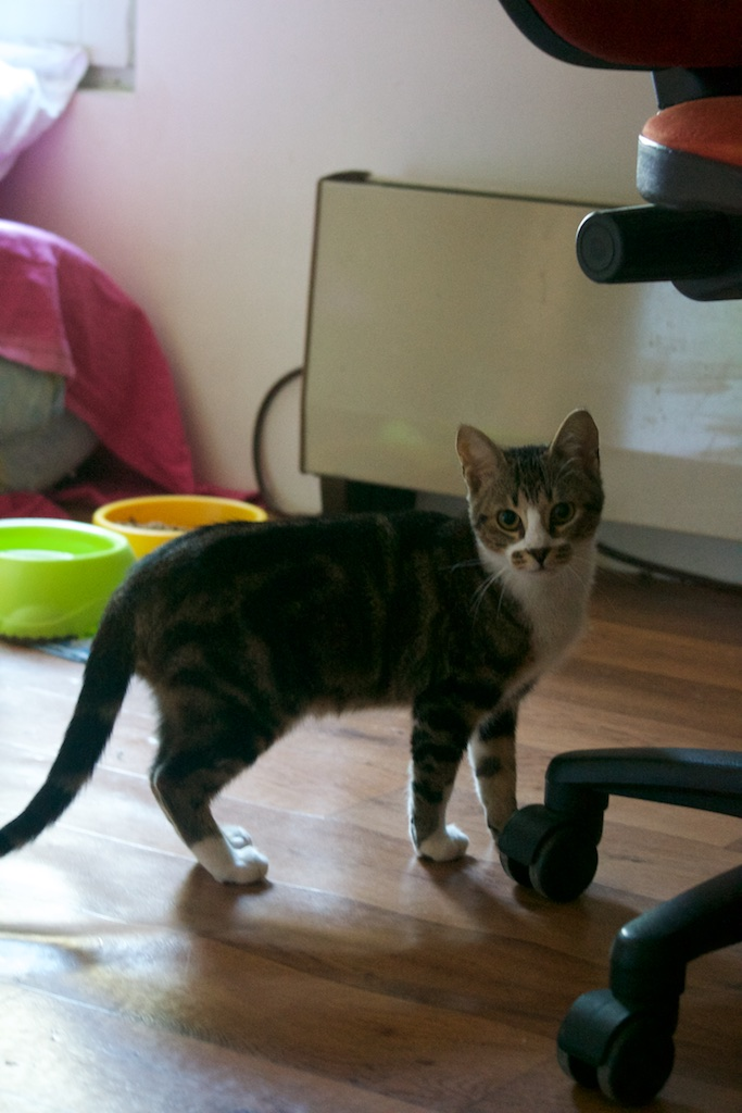 URGENT - Recherche prise en charge asso/refuge pour 5 chatons d'un site de chats libres (Bretagne - 35) Dsc_0132