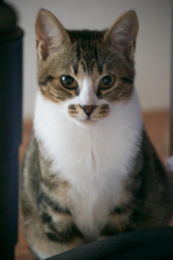 URGENT - Recherche prise en charge asso/refuge pour 5 chatons d'un site de chats libres (Bretagne - 35) Dsc_0133