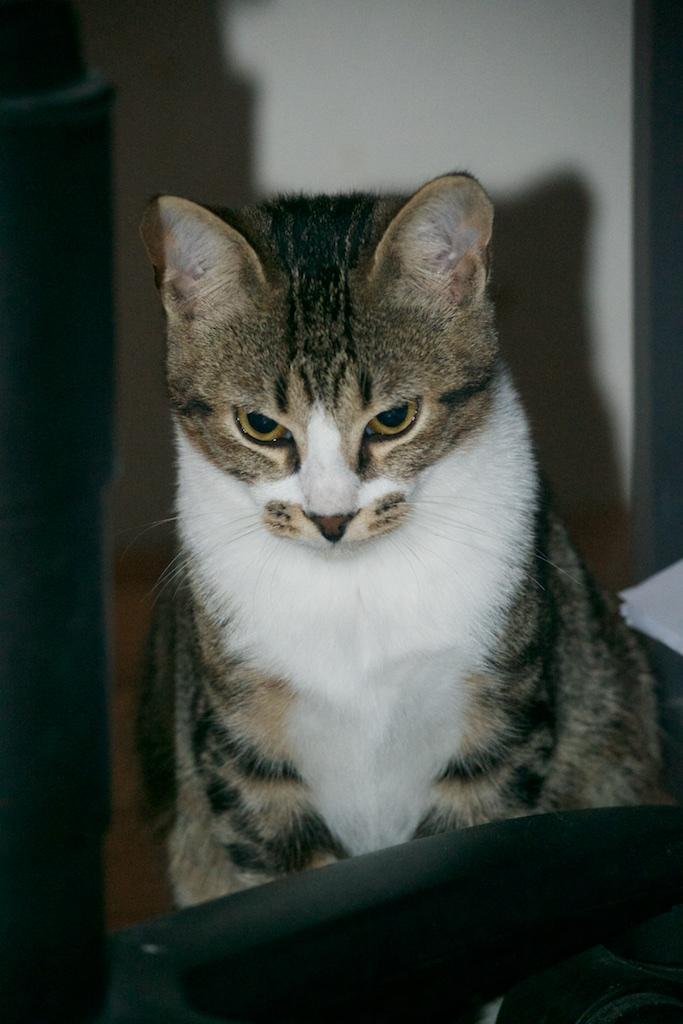 URGENT - Recherche prise en charge asso/refuge pour 5 chatons d'un site de chats libres (Bretagne - 35) Dsc_0134
