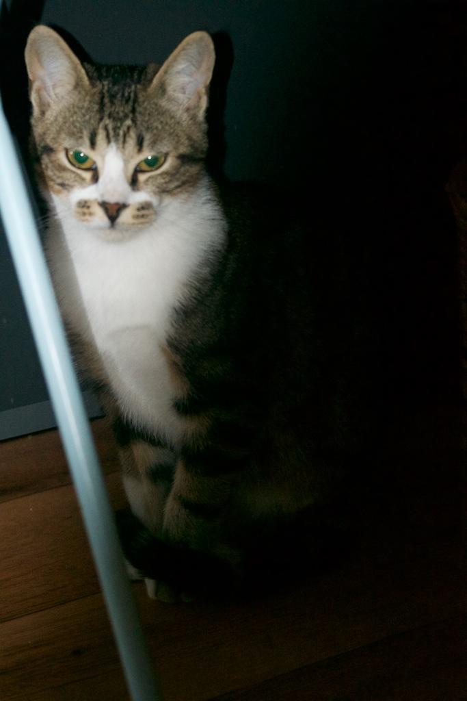 URGENT - Recherche prise en charge asso/refuge pour 5 chatons d'un site de chats libres (Bretagne - 35) Dsc_0135