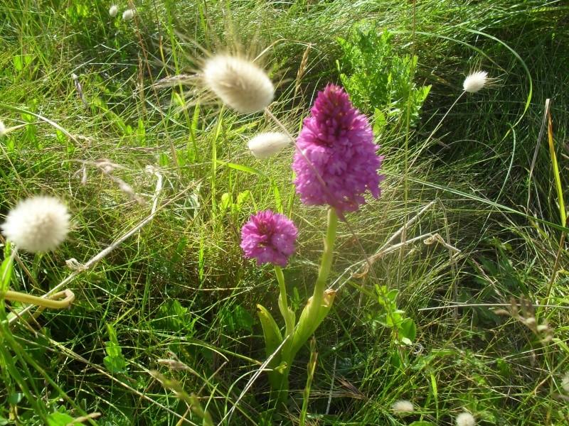 FLEURS OU ARBRES par ordre ALPHABETIQUE - Page 2 Orchid10