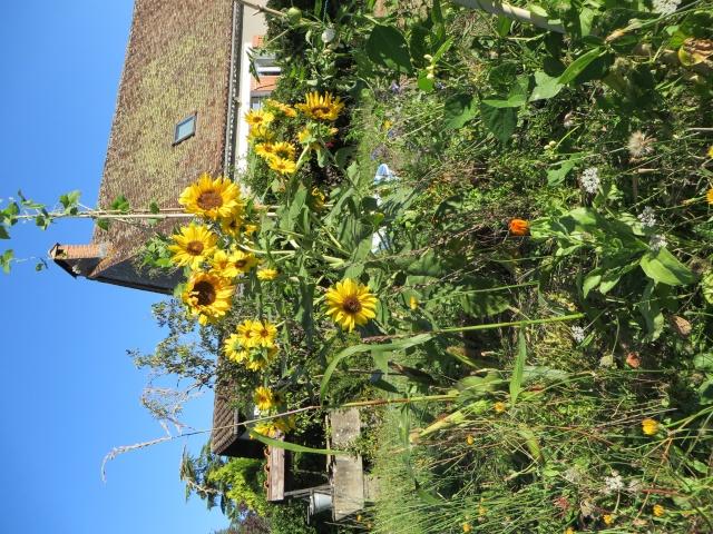 Balcons, Terrasses et Jardins...Plantes et Aménagements... Img_7310