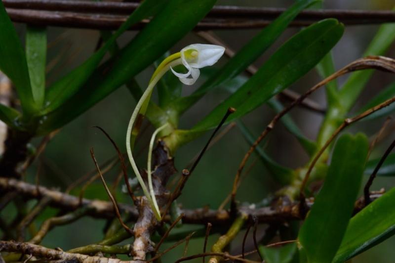 La fleur du botaniste Dsc_9410