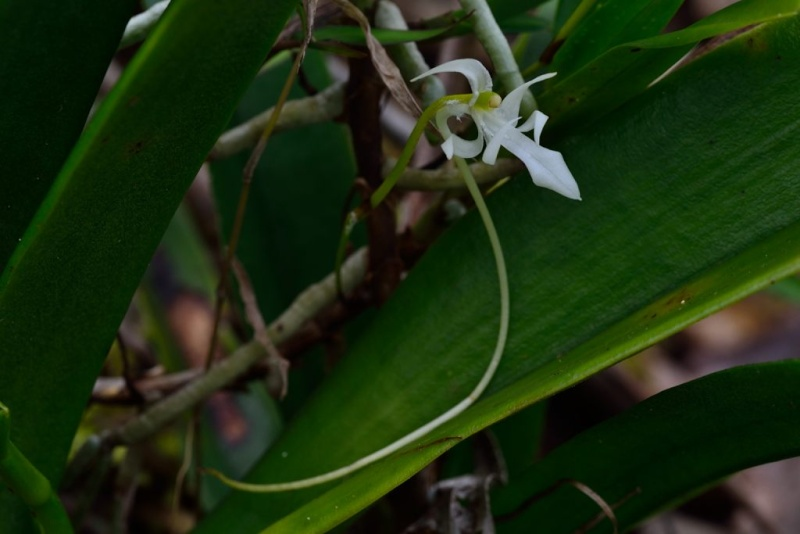 La fleur du botaniste Jumell13