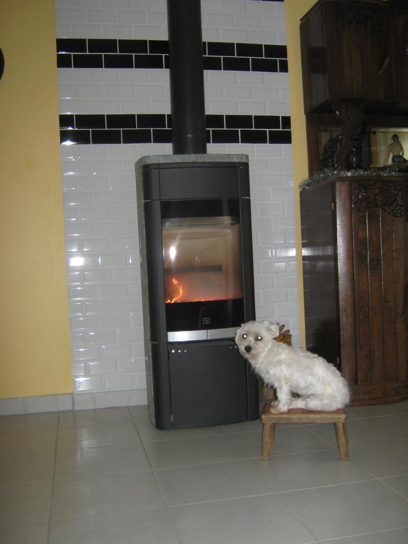 Ma chienne Bella 00211