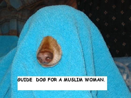 Helpful dog... 112