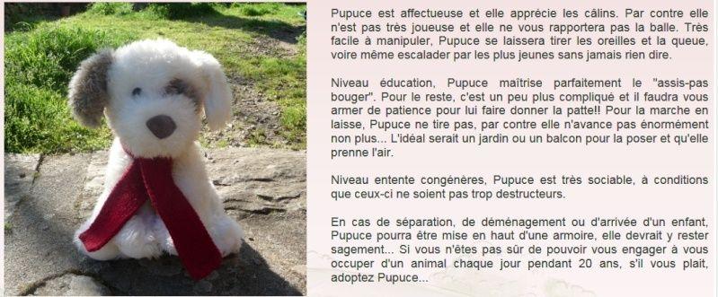 PUPUCE Pupuce10