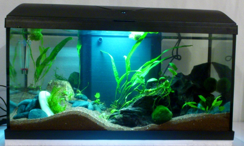 Aquarium 60 L de Estrella87 Dsc_0512