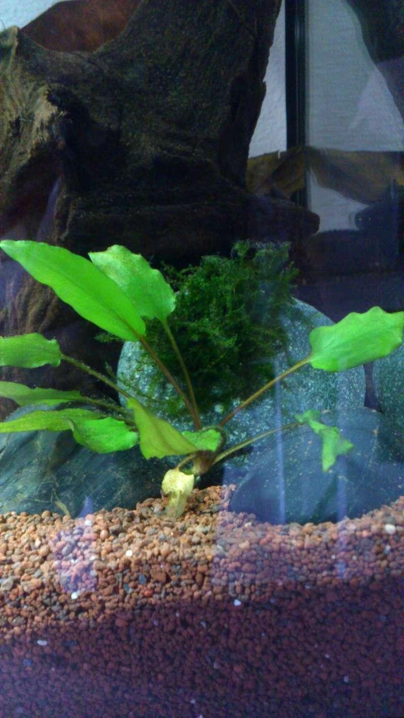Aquarium 60 L de Estrella87 Dsc_0513