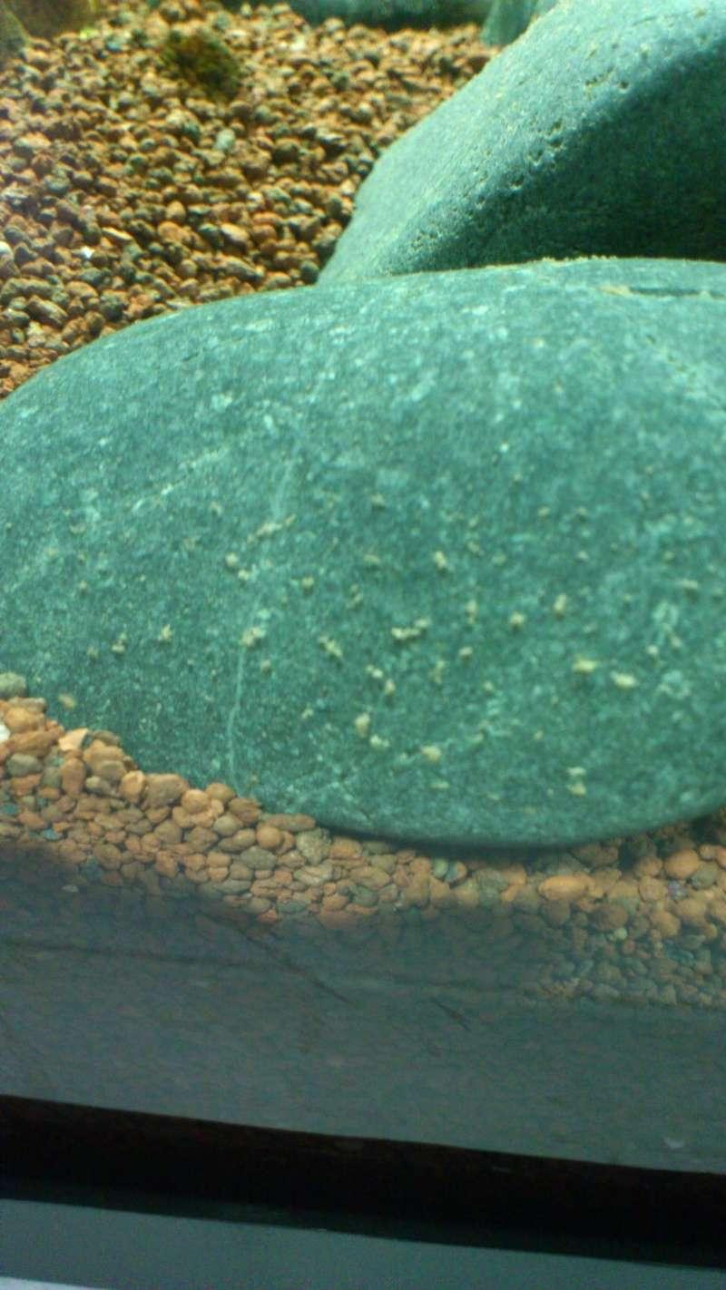 Aquarium 60 L de Estrella87 Dsc_0610