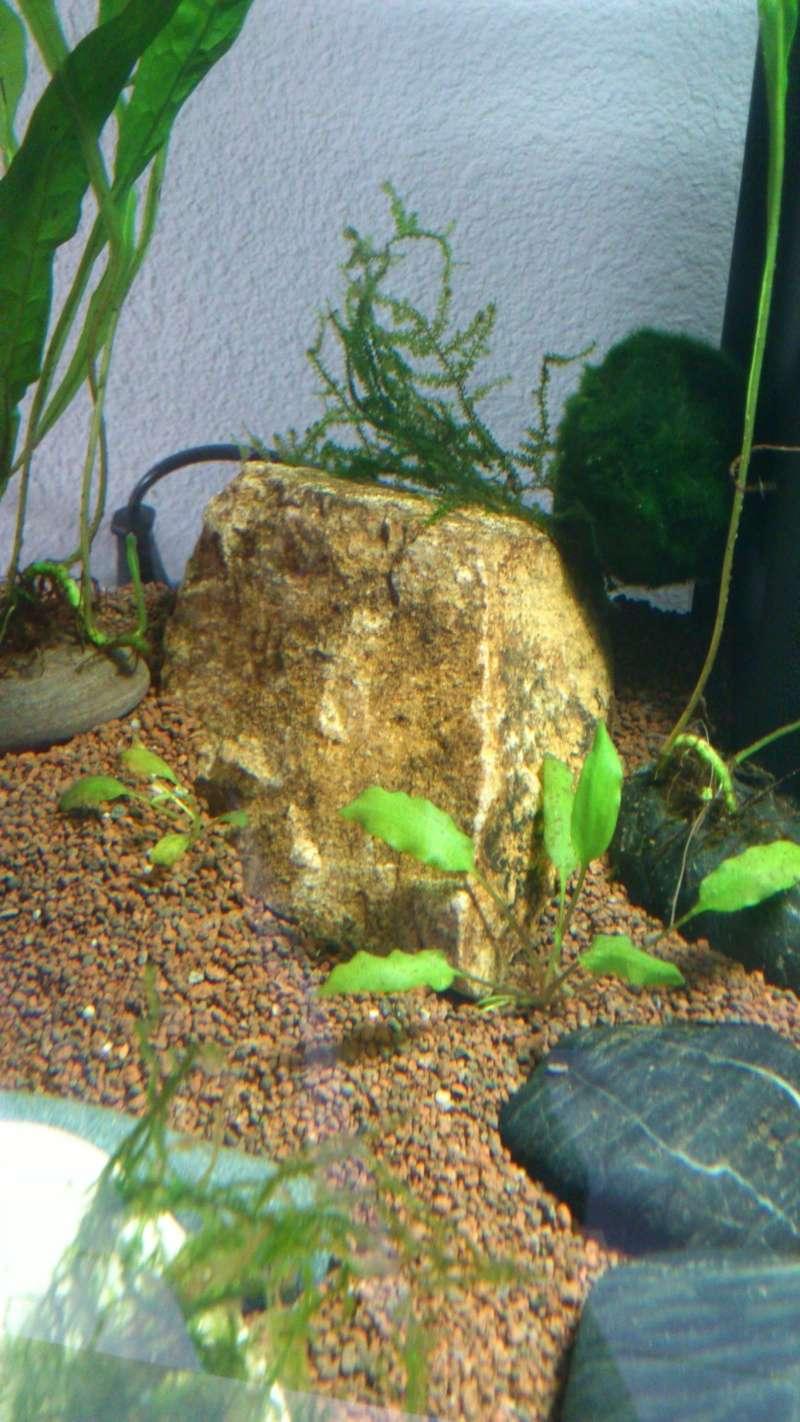 Aquarium 60 L de Estrella87 Dsc_0612