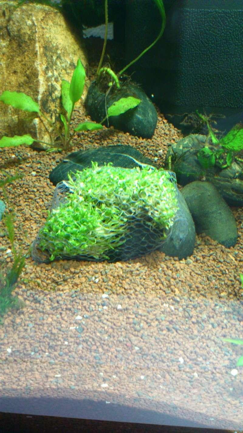 Aquarium 60 L de Estrella87 Dsc_0615