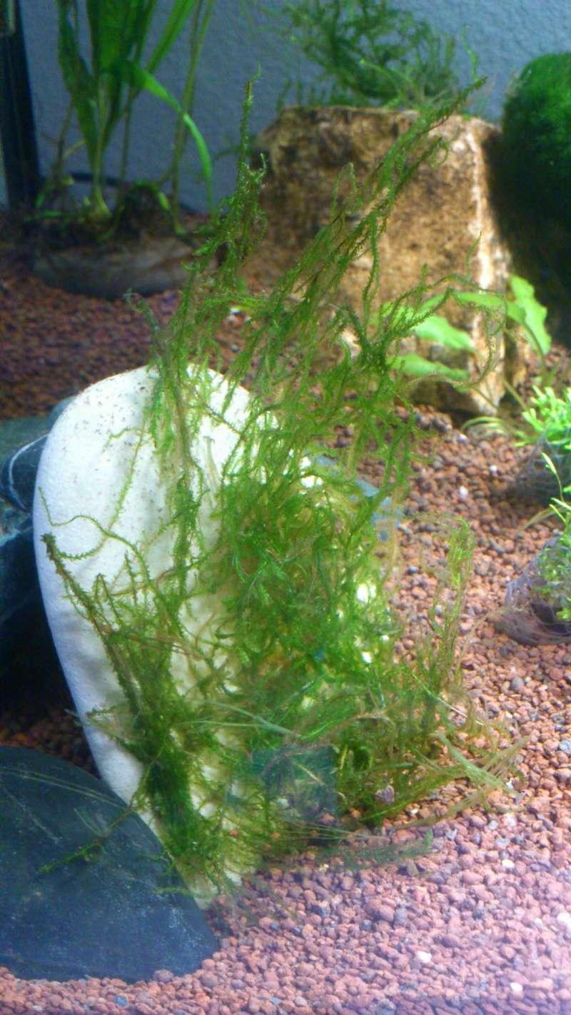Aquarium 60 L de Estrella87 - Page 2 Dsc_0618