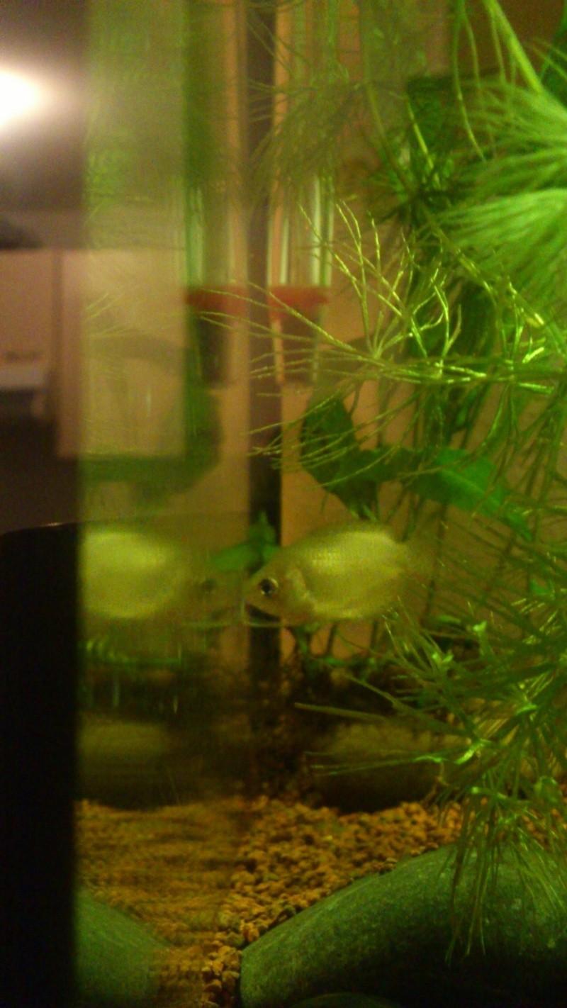 Aquarium 60 L de Estrella87 - Page 3 Dsc_0630