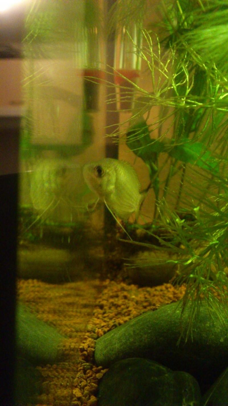 Aquarium 60 L de Estrella87 - Page 3 Dsc_0631