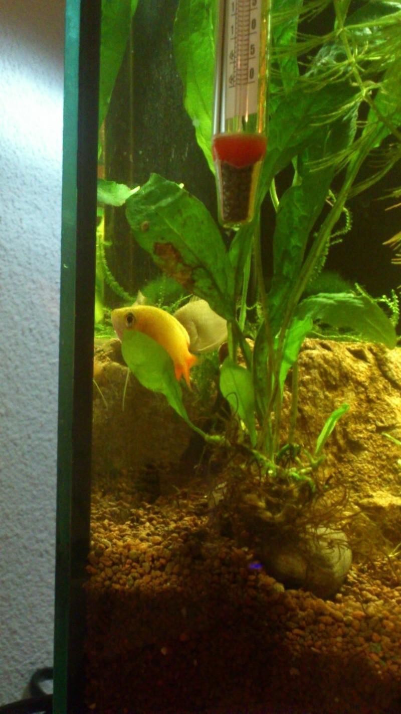Aquarium 60 L de Estrella87 - Page 3 Dsc_0634