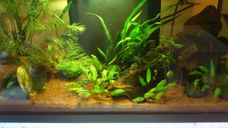 Aquarium 60 L de Estrella87 - Page 3 Dsc_0635