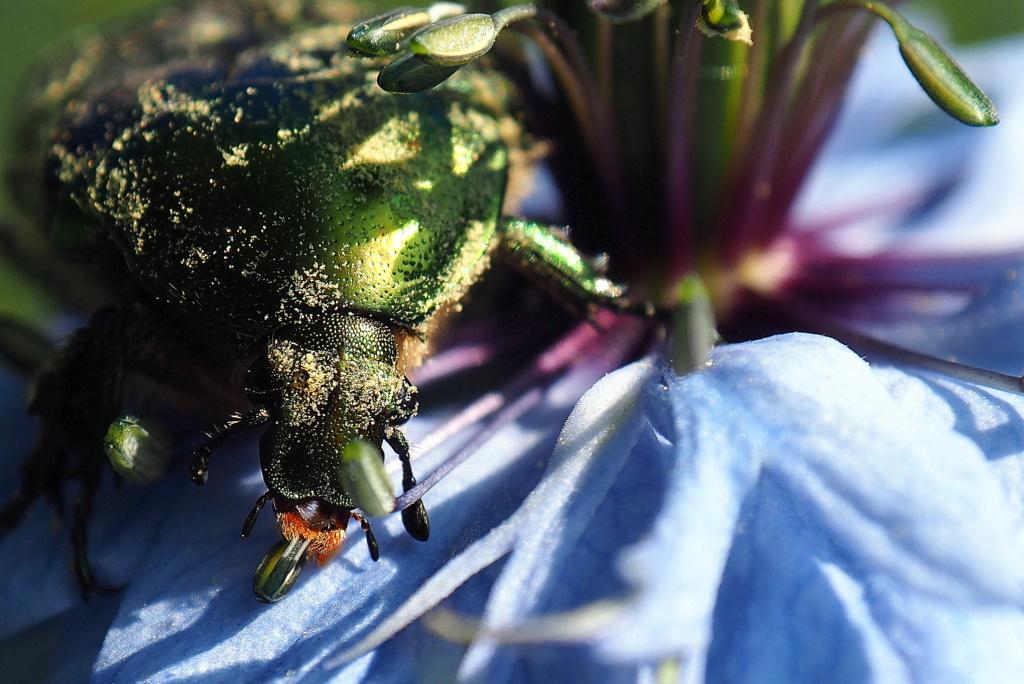 Au Pollen !!  P5220810