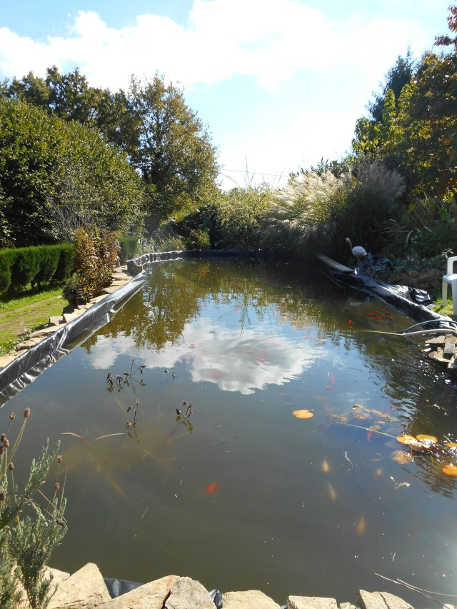 Notre bassin... Dscn8711