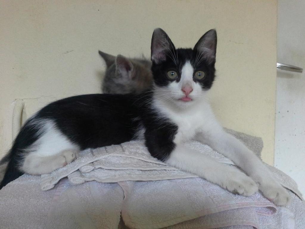 PAT (Hiro) et MAXWELL (Mohini) Mohini10