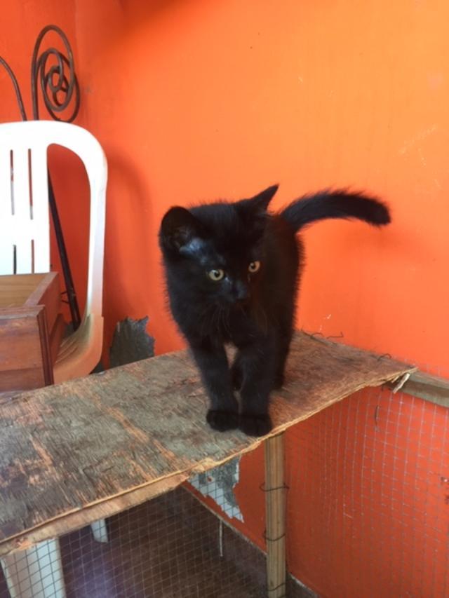 SOS petit chaton tout noir - Réunion Thumbn31