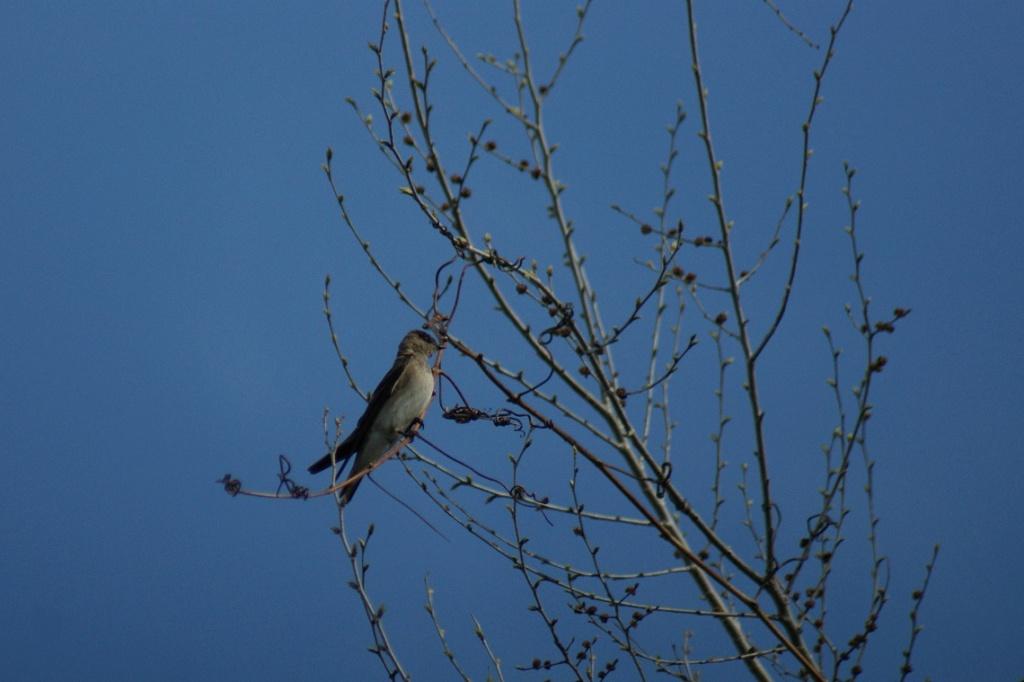 Oiseaux à identifier Parc_d24