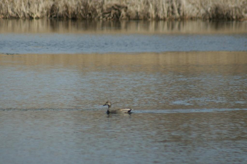 Oiseaux à identifier Parc_d25