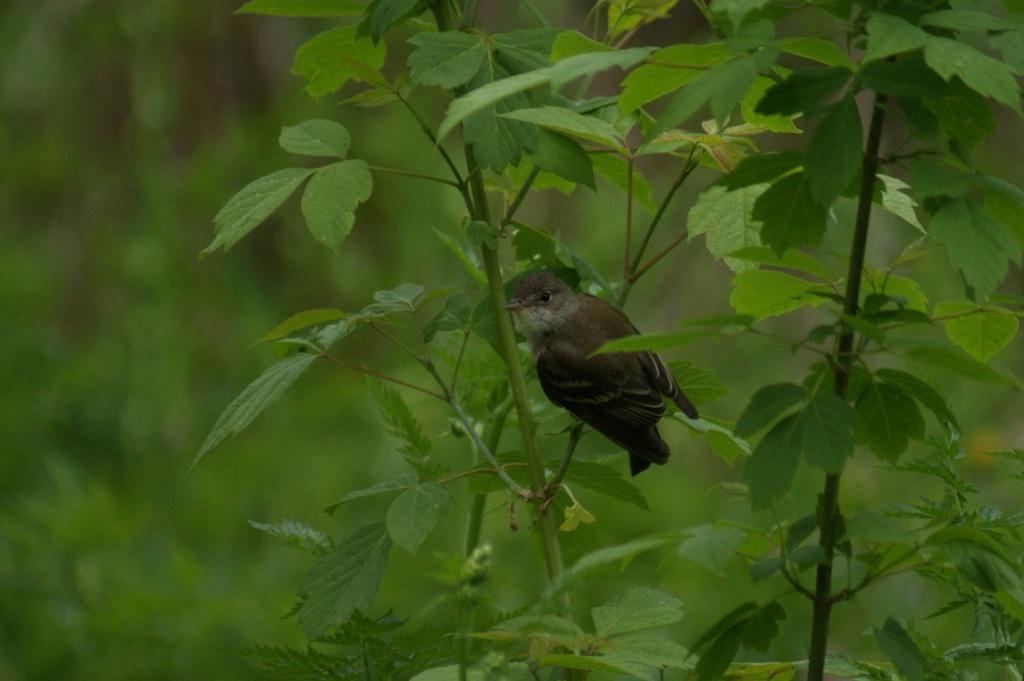 Oiseaux à identifier Parc_d34
