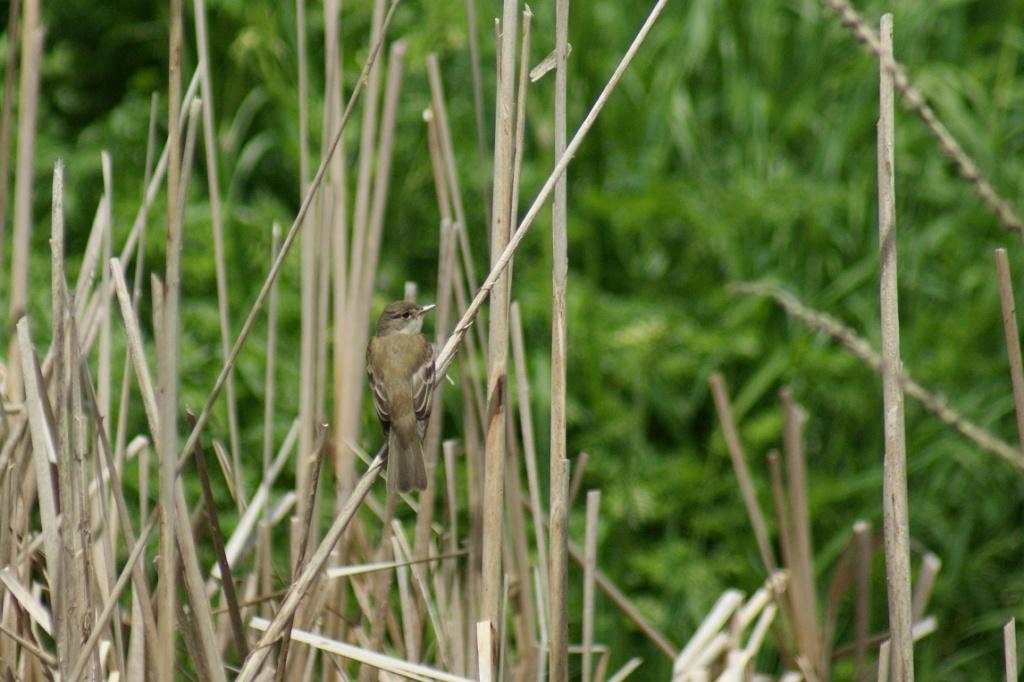 Oiseaux à identifier Parc_d35