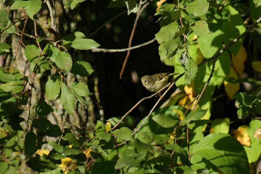 Oiseaux à identifier Parc_d49