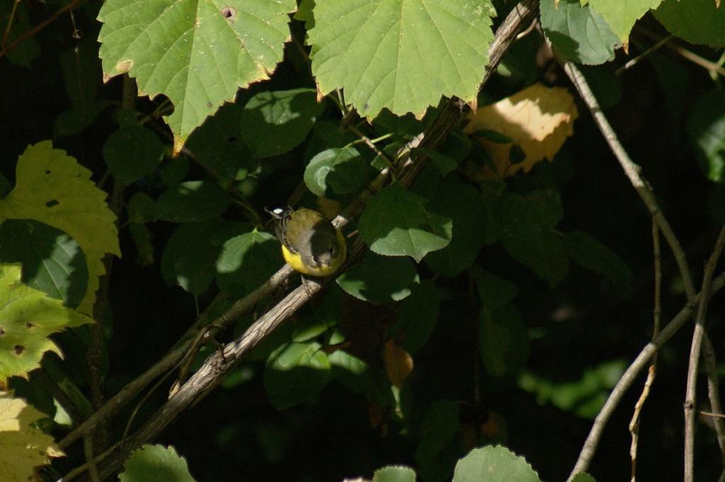 Oiseaux à identifier Parc_d50