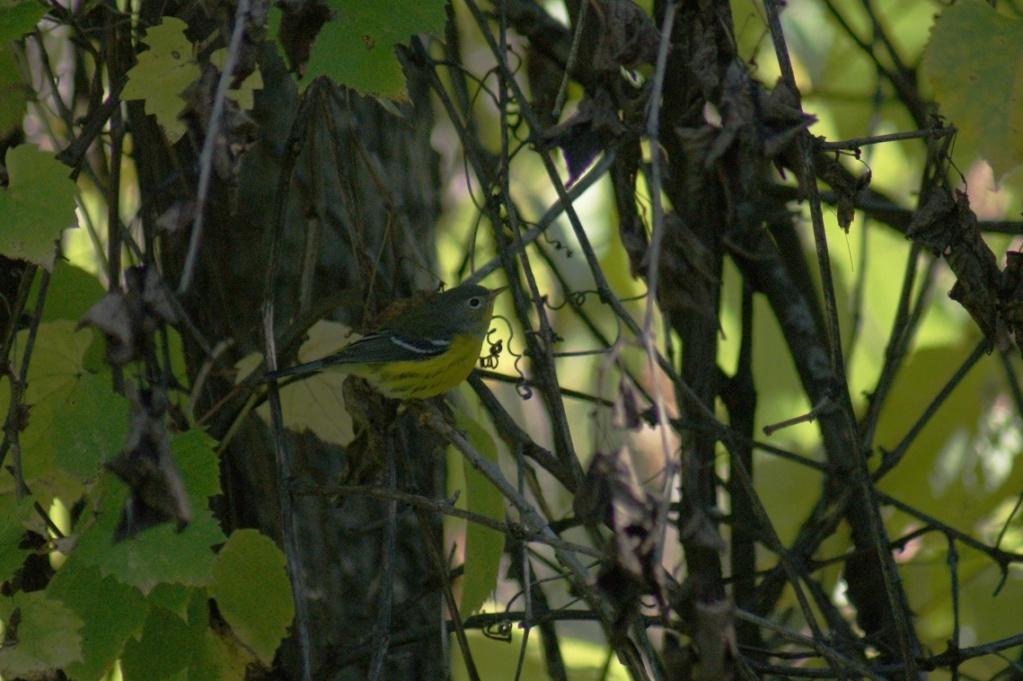 Oiseaux à identifier Parc_d51