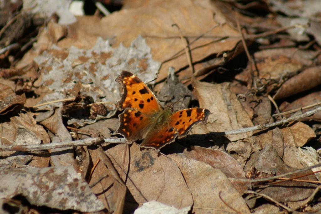 Papillon Parc_d61