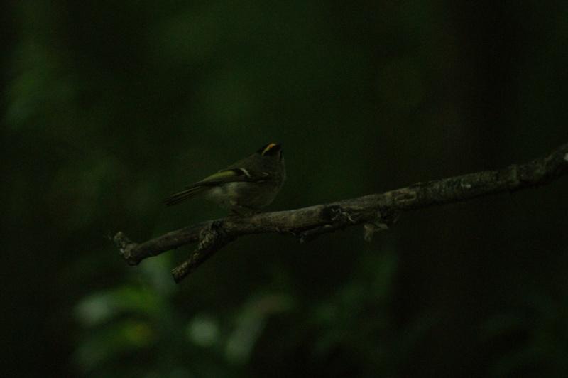 Petites bêtes à identifier... Parc_n13